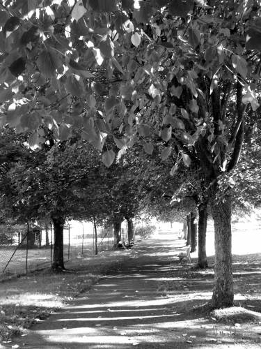 automne n&b.jpg