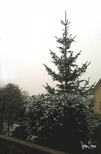 photo neige 28012012.JPG