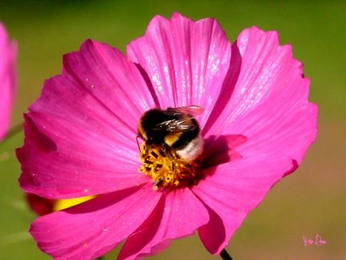 nature, fleur, photo