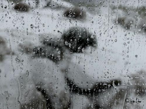 neige 12012020.JPG