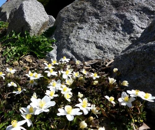 minéral et fleurs.JPG