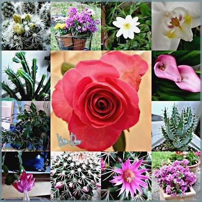 fleurs,maison,passion,