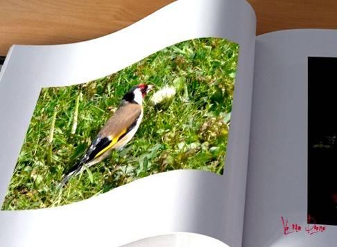modif oiseau.jpg