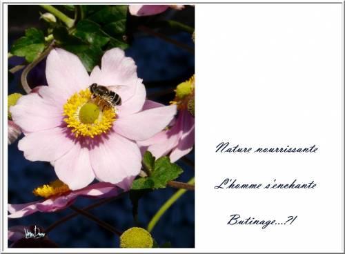 carte postale haiku.jpg