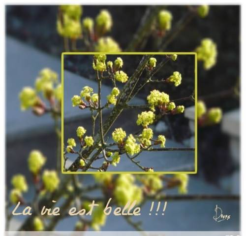 photocollage bourgeons.JPG